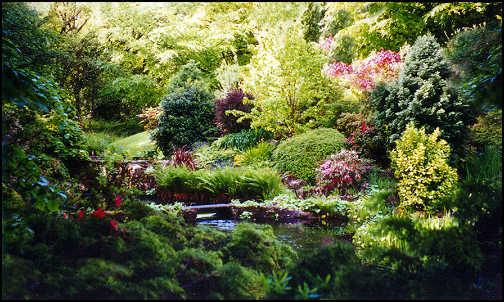 garden example.jpg