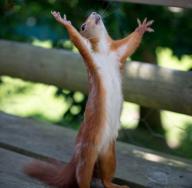 cursing-squirrel